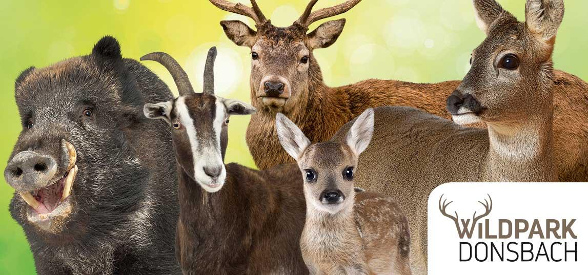 Der Wildpark Donsbach beheimatet eine vielzahl unterschiedlicher Wildtiere, die in großzügigen Freigehegen beobachtet werden können