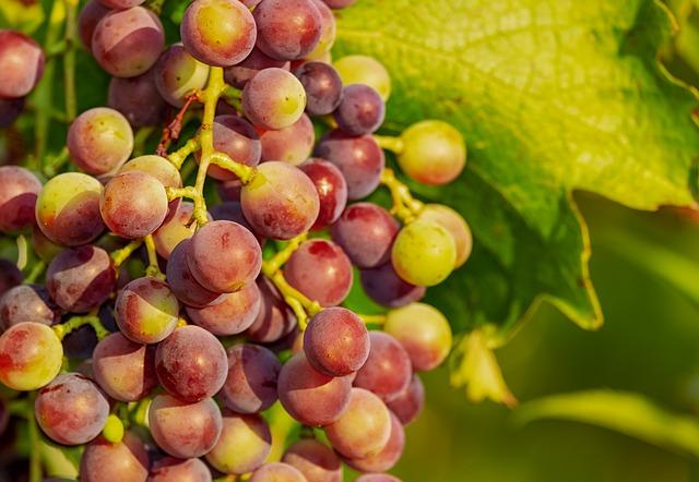 Weintrauben; Quelle Pixabay