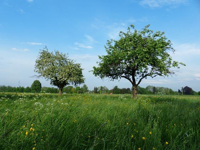 Apfelbäume auf einer Wiese. Quelle: Pixabay