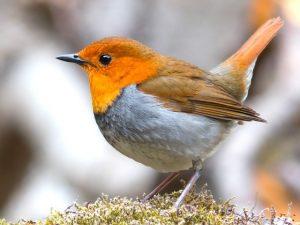 Ein Vogel: Quelle Pixabay