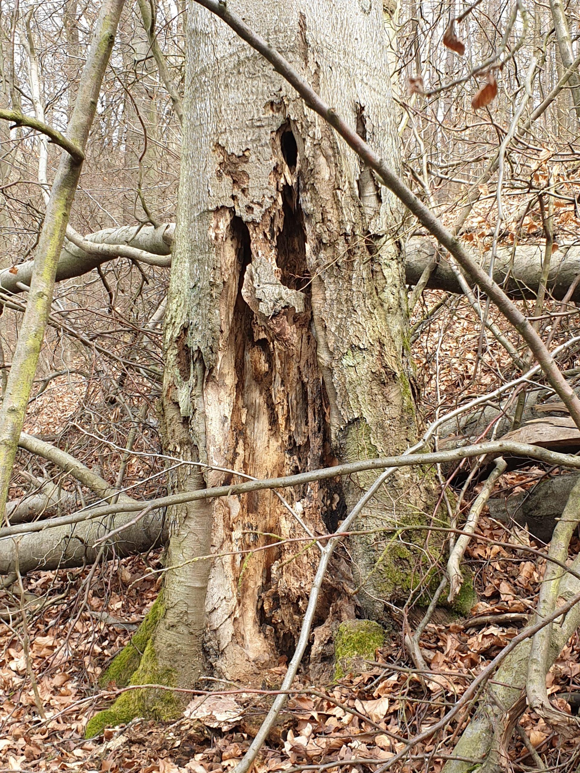 Das Bild zeigt einen abgestorbenen Baum